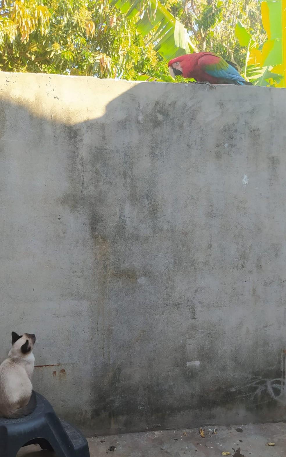 A arara vive em harmonia com os outros animais de estimação de Rosilene — Foto: Arquivo Pessoal/Rosilene Nascimento