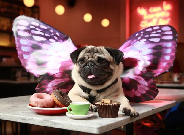Pug Cafe (Foto: Reprodução/Facebook)