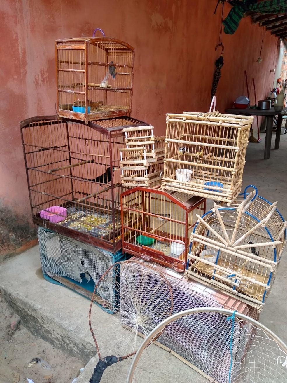 Aves eram mantidas em cativeiro — Foto: Divulgação/PM-PI