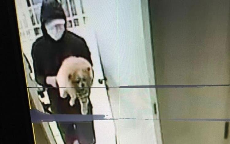 Criminosos invadem casa e levam cachorro de estimação em Florianópolis