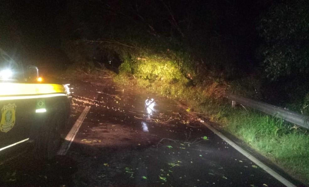 PRF e Bombeiros trabalharam na retirada de árvores que caíram na BR-470 — Foto: PRF/Divulgação