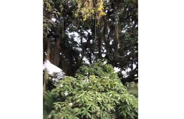 Porchat mostrou a vista de uma das janelas da casa e comemorou o quintal com muito verde: 'olha que maneira essa mangueira' (Foto: Reprodução)