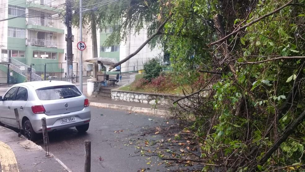 Rua Belmonte ficou interditada por causa de árvore que caiu na madrugada desta quinta-feira (31).  — Foto: Cid Vaz / TV Bahia