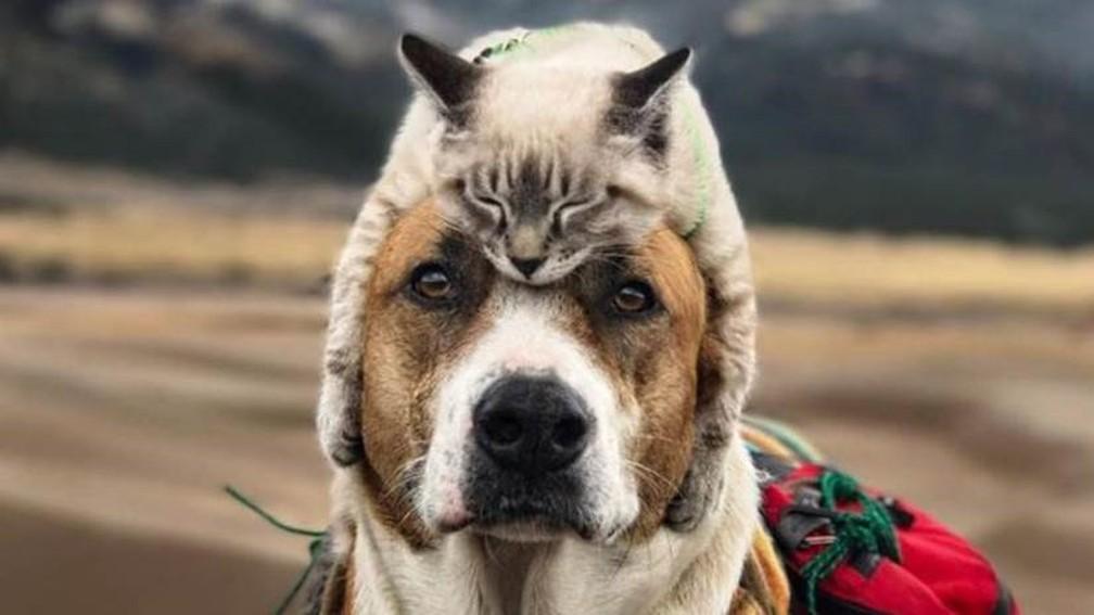 A amizade de Baloo (o gato) e Henry (o cachorro) conquistou meio milhão de seguidores no Instagram (Foto: Cynthia Bennett)