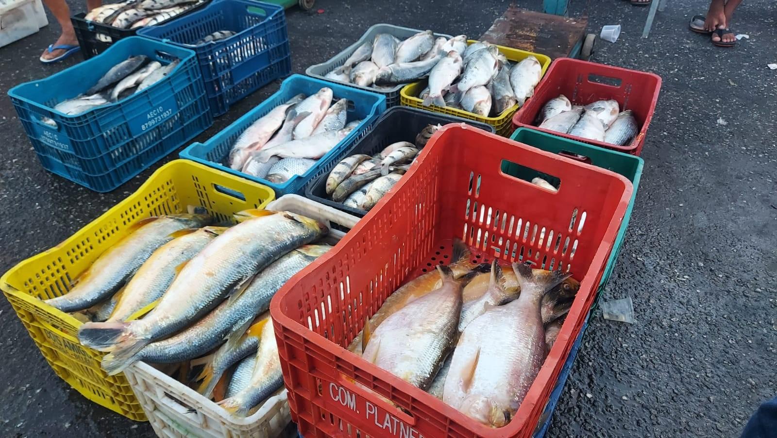 Venda de peixe no Ver-o-Peso, em Belém, é afetada por desinformação sobre a 'doença da urina preta', dizem pescadores