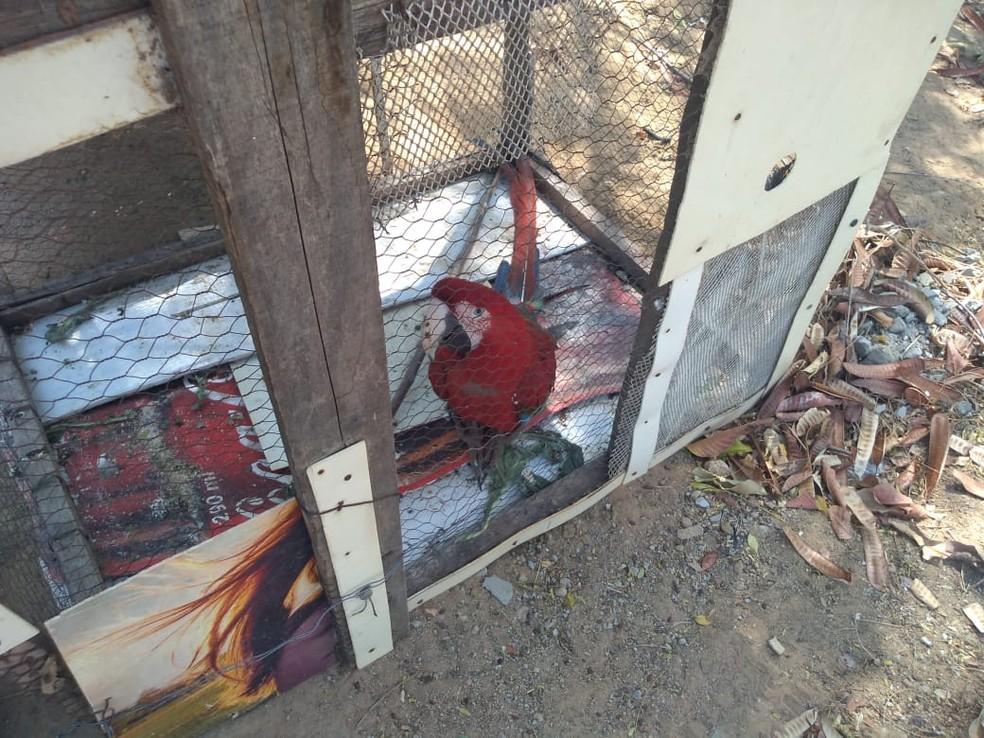 Operação apreendeu 130 aves silvestres no Sul do Piauí — Foto: Divulgação/Batalhão de Polícia Militar Ambiental do Piauí