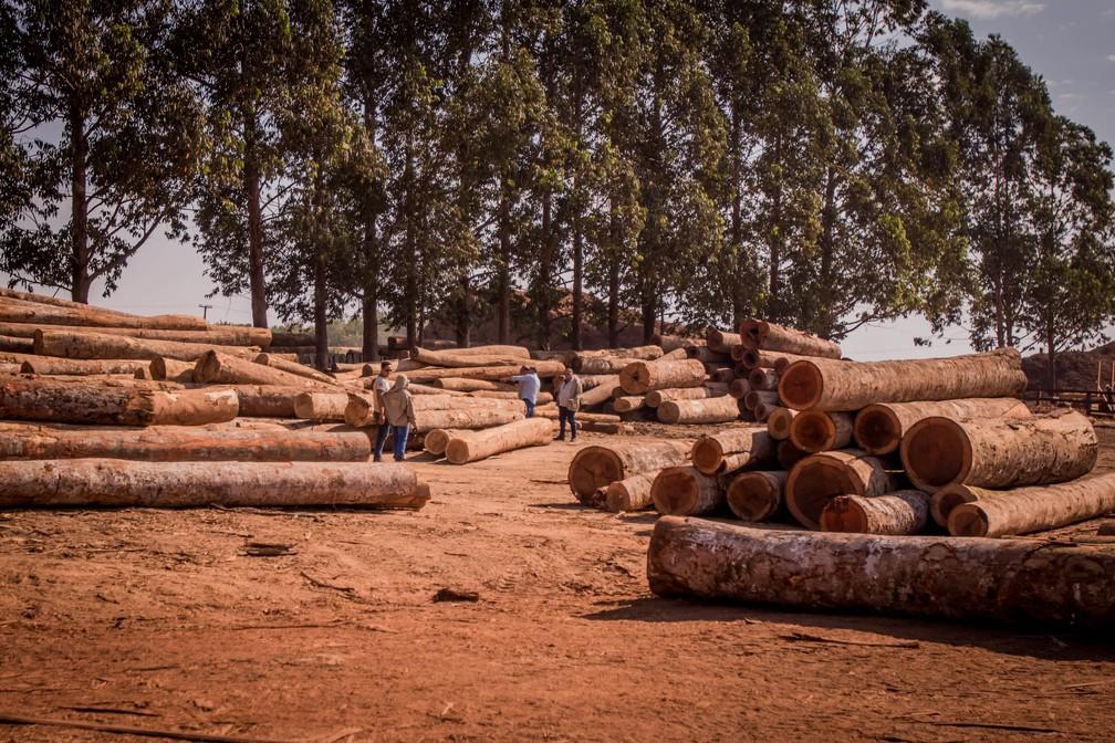 Fiscalização aplica R$ 7,5 milhões em multas por desmatamento de 1,5 mil hectares da floresta Amazônica em Mato Grosso — Foto: Christiano Antonucci/ Secom-MT
