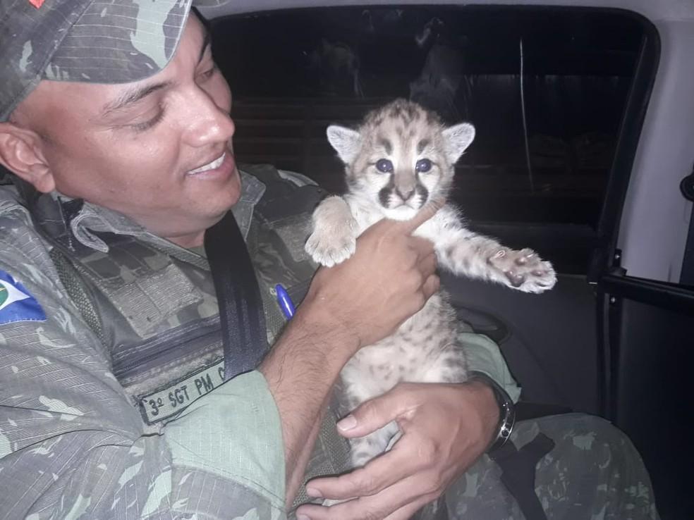 Filhote foi encaminhado para o Hospital Veterinário da UFMT — Foto: Divulgação