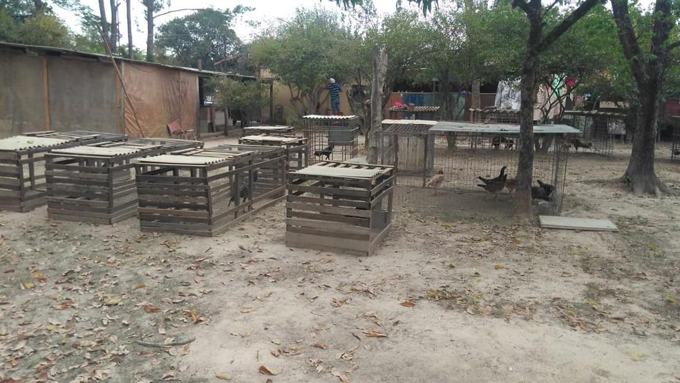 Cerca de 40 apostadores foram detidos durante rinha de galo em Salto — Foto: Divulgação/ Guarda Municipal de Salto