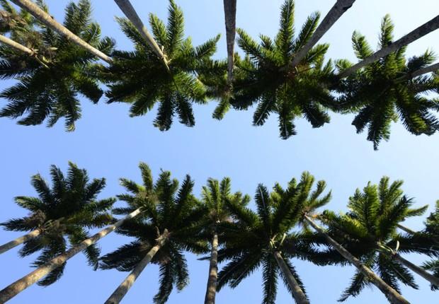 Jardim Botânico - RJ - natureza - árvore - paz - bem-estar - descanso (Foto: Alexandre Macieira/ Riotur / Fotos Públicas)