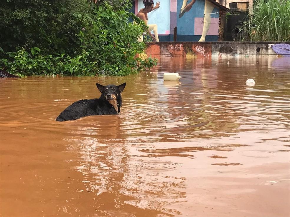 Cachorro enfrenta enchente em Raposos, na Grande BH — Foto: Eulym Ferreira/TV Globo