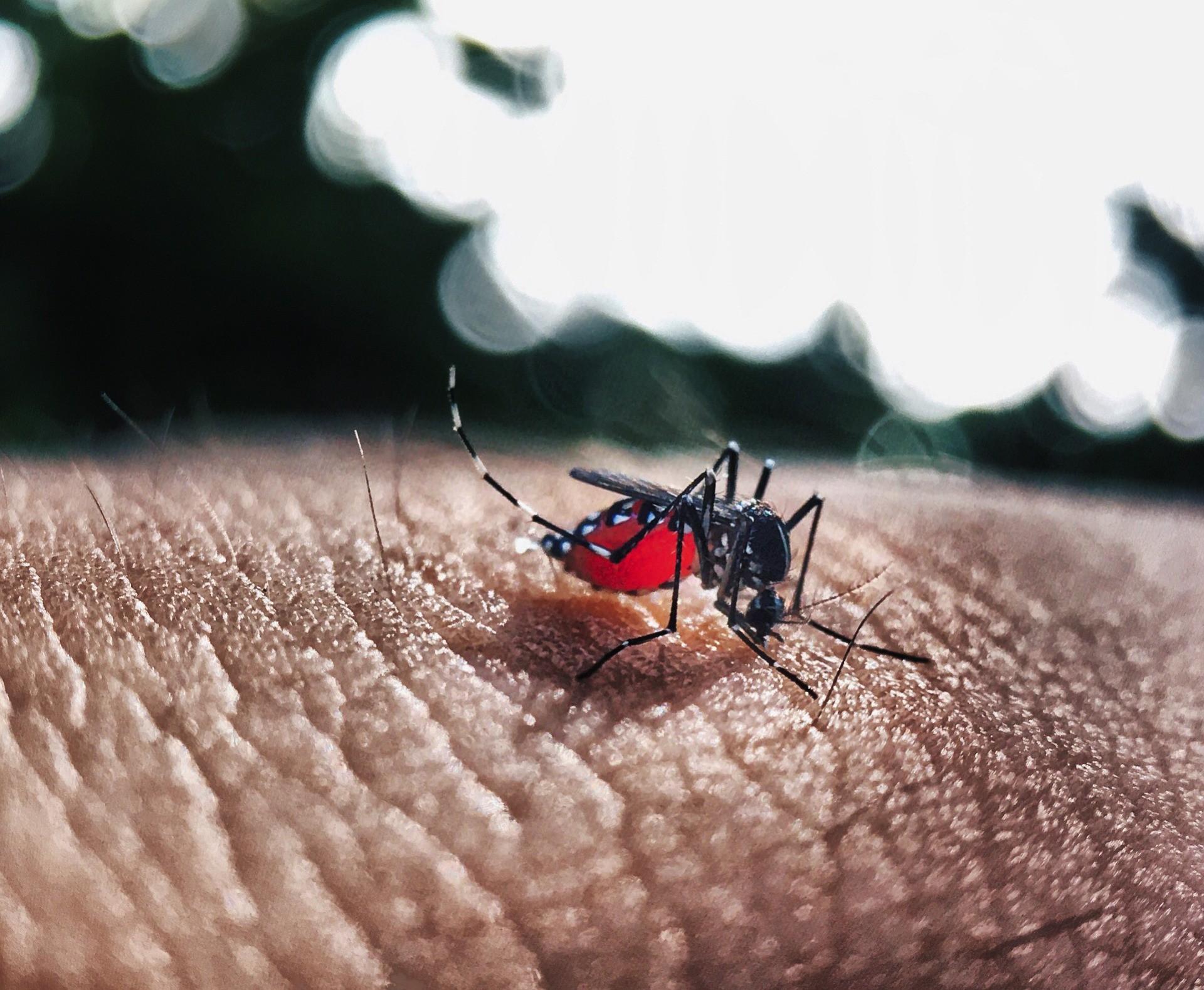 Casos de dengue em SP aumentam mais de 2.100%, diz Ministério da Saúde - Noticias