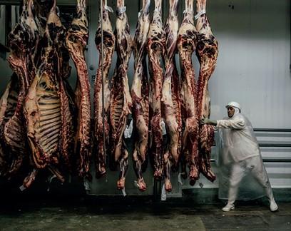 Carcaças  suspensas em frigorífico.  China compra cada vez mais carne brasileira