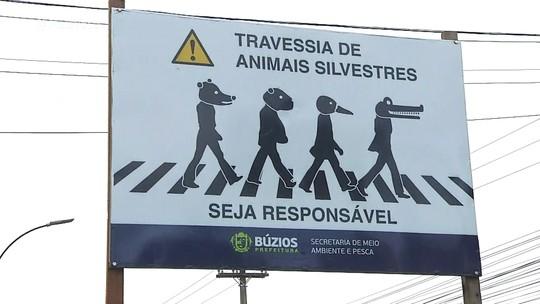 Jacaré flagrado ao atravessar rua em Búzios, RJ, é destaque no 'Mais Você'