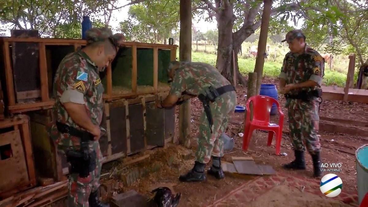 Polícia leva 20 pessoas para delegacia e apreende 50 galos de rinha em Campo Grande