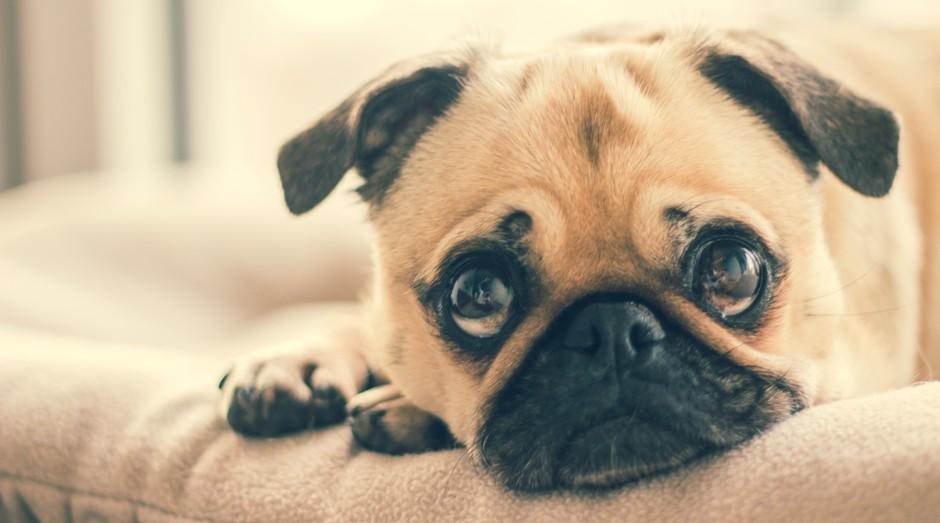 A Pet Mais Vida tem planos de saúde animal que variam de R$ 55 a R$ 192 mensais (Foto: Burst/Pexels)