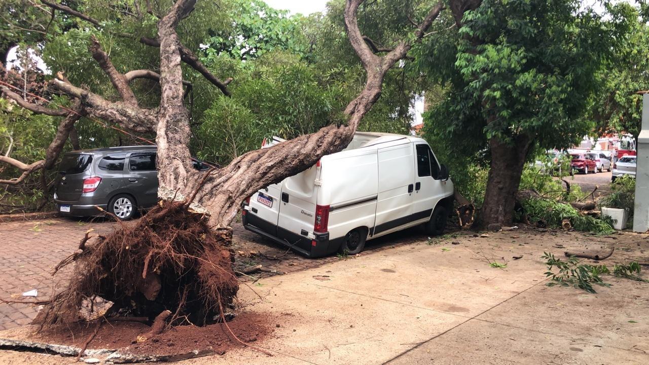 Árvore cai sobre carros na Praça Santo Antônio, em Ribeirão Preto; colmeia se desfaz e abelhas picam moradores