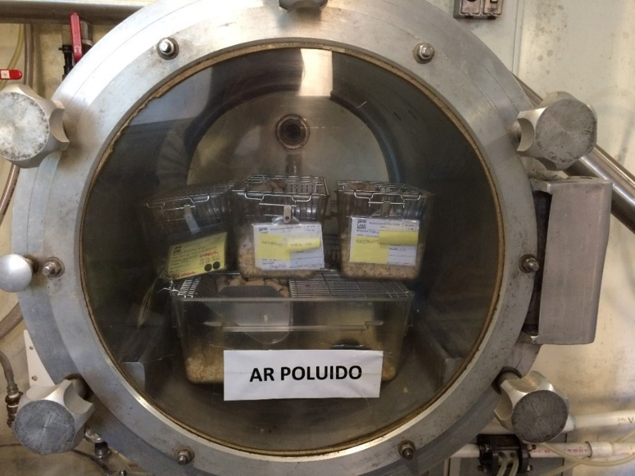 Câmara de ar poluído onde os roedores ficaram para o estudo da USP (Foto: Elaine Frande)