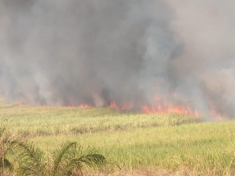Incêndio atingiu uma área de vegetação entre Jaú e Bocaina — Foto: Defesa Civil de Bocaina /Divulgação