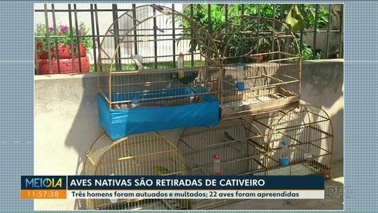 Polícia descobre cativeiro de aves nativas em Cidade Gaúcha