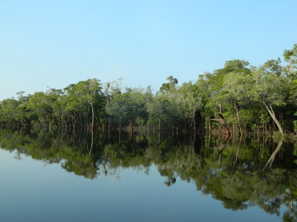 Dia de Proteção às florestas também é Dia do Curupira, o protetor das matas (Foto: Arquivo TG)