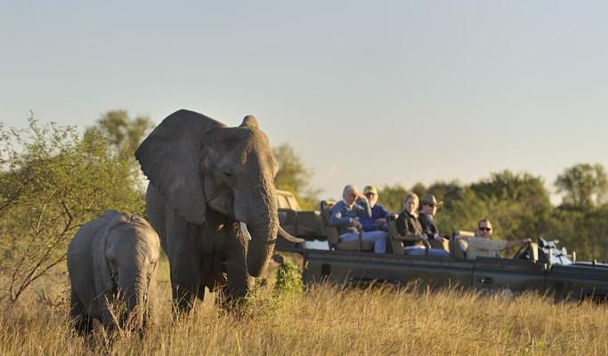 Vida selvagem: Conheça o safári preferido dos famosos na África do Sul