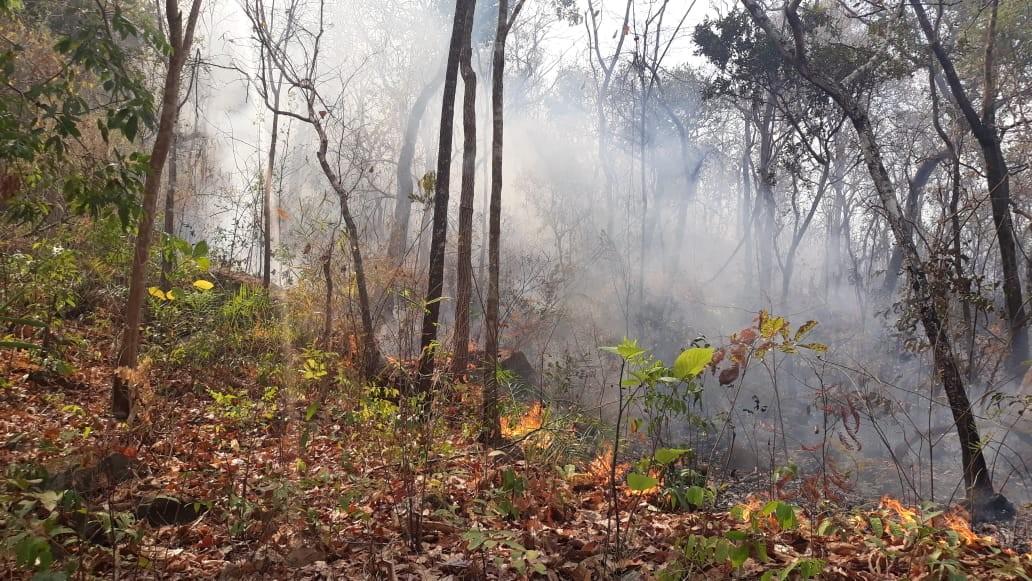 Equipes dos Bombeiros e Defesa Civil tentam controlar queimada na região sul de Palmas - Notícias - Plantão Diário