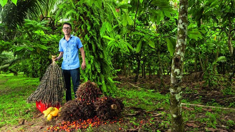O engenheiro agrônomo Jailson Takamatsu cultiva dendê, açaí e cacau em sistema agroflorestal (Foto: Fernando Martinho)