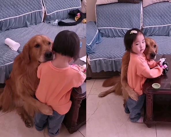 Golden retriever protege menina ao vê-la chorando após mãe dar bronca; Momento viralizou (Foto: Reprodução)