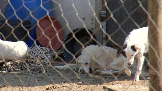 Superlotação de cães e gatos em canil municipal preocupa moradores em Guareí
