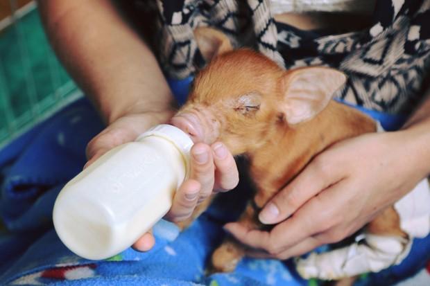 8 santuários de animais para visitar com a família (Foto: Divulgação)