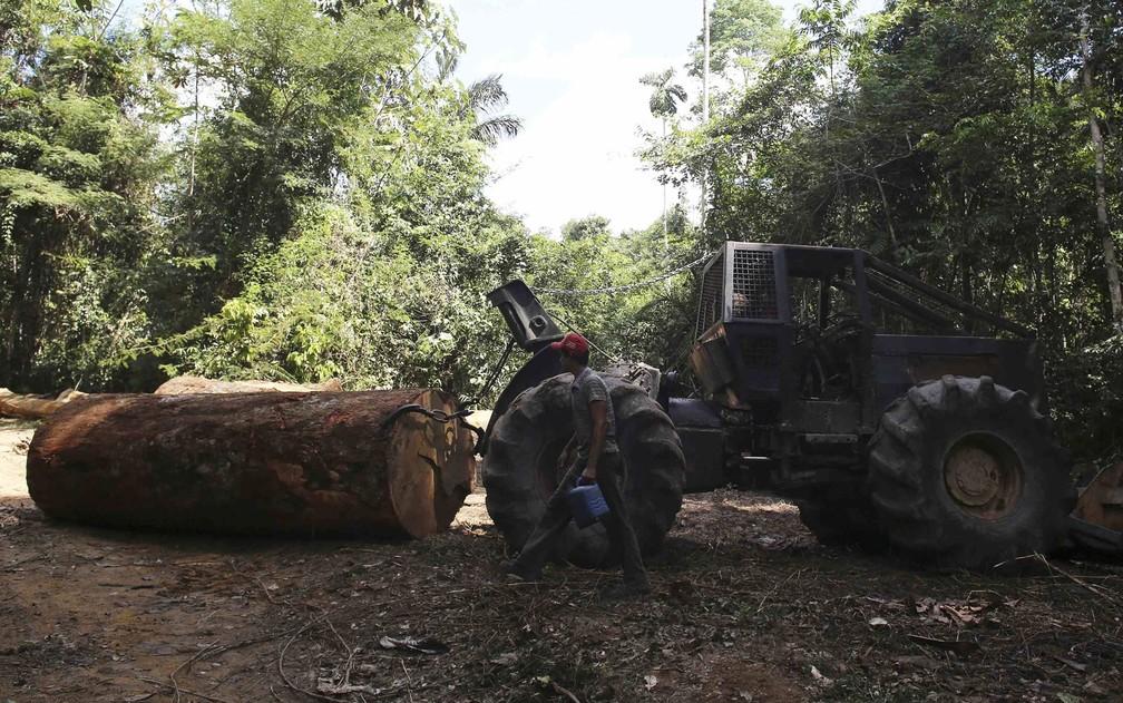 Para derrubar as enormes árvores amazônicas, madeireiros costumam usar tratores e correntes; brasileiros criaram um código para que as máquinas deixem de funcionar sempre que estiverem em uma área onde o desmatamento e o garimpo sejam ilegais — Foto: Nacho Doce/Reuters