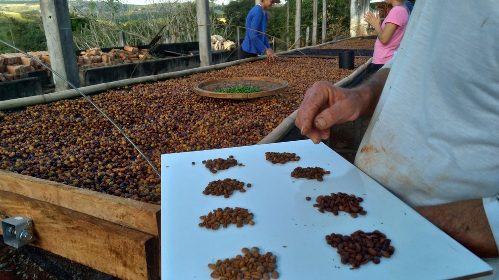 Propriedade da família de Raquel no Sul de Minas trabalha com grãos selecionados (Foto: Arquivo Pessoal/Raquel Miranda)