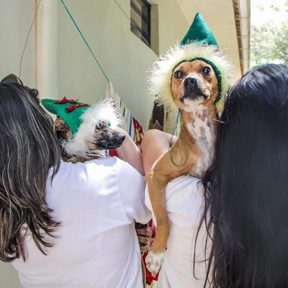 Os animais estão castrados, vacinados e vermifugados. — Foto:  Raquel Schwengber/Divulgação