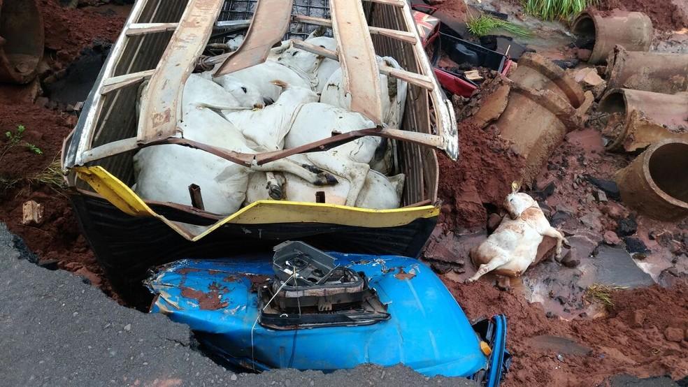 Novilhas morreram em acidente na MS-475 (Foto: PMR/Divulgação)