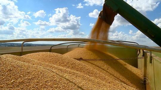 Safra de soja estimada em 17 milhões de toneladas no RS gera empregos e mantém trabalho do dia até a noite