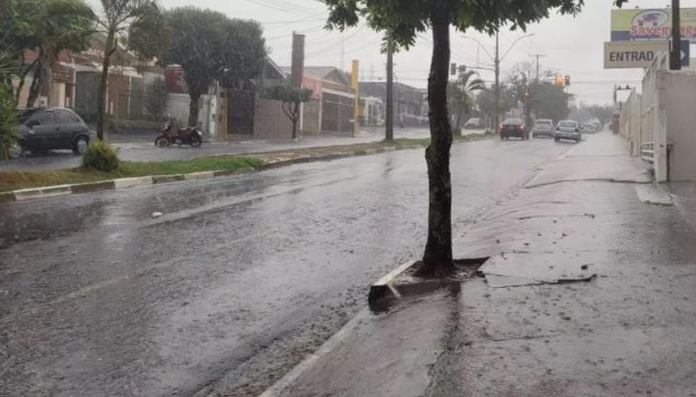 Araraquara tem chuva forte com queda de árvores — Foto: Fernando Baldassari/CBN Araraquara