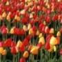Proteção de Tela: Spring Bloom