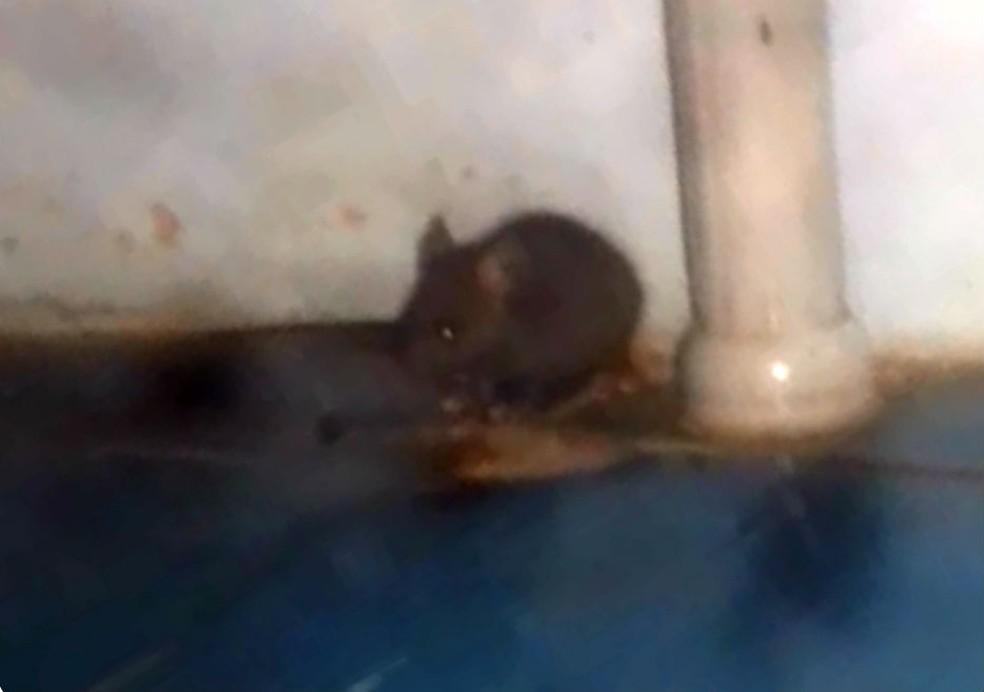 Paciente encontra rato em sala de curativos no Hospital de Borborema — Foto: Arquivo Pessoal