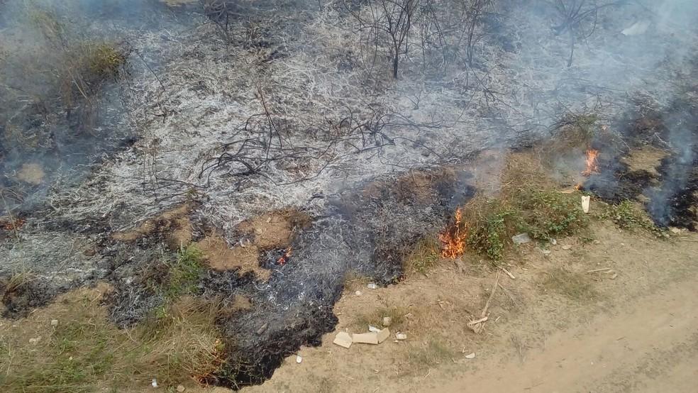 Parte da vegetação foi destruída (Foto: Pablo Magalhães/Arquivo pessoal)