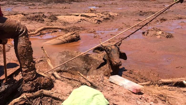resgate-bovino-brumadinho (Foto: CRMV-MG)