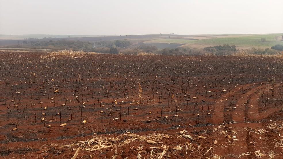Queimada registrada em Palmital (SP) atingiu 5 mil hectares  — Foto: Adolfo Lima/ TV TEM