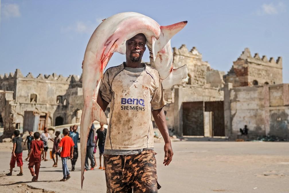 5 de janeiro - Um pescador somali carrega um tubarão-martelo em sua cabeça para o mercado de peixe Hamarweyne, perto do porto em Mogadíscio, na Somália (Foto: Mohamed Abdiwahab/AFP)