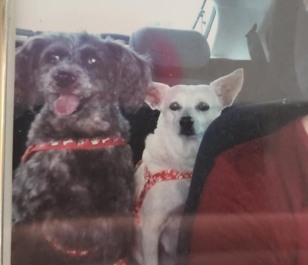 Cachorros Pelúcio e Maria Clara foram levados por bandidos durante roubo de carro em Natal — Foto: Cedida