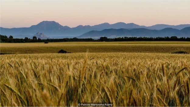 A massa Lorighittas é feita com farinha produzida a partir de sêmola de trigo duro, cultivado nos campos da Sardenha (Foto: PATRIZIO MARTORANA / ALAMY STOCK PHOTO)