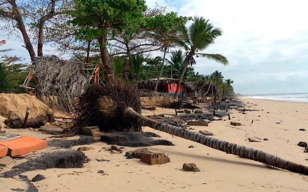 Coqueiro caído na praia em Prado após ressaca do mar (Foto: Site Prado Notícia)