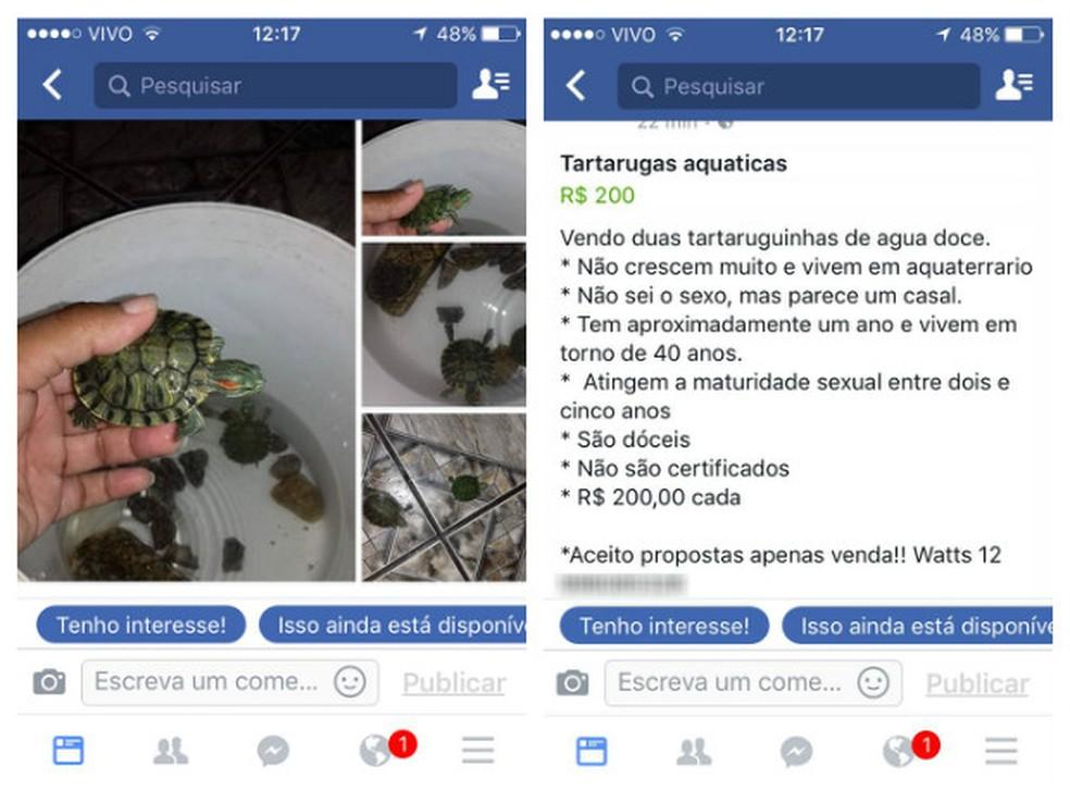 Duas tartarugas aquáticas foram apreendidas em São Sebastião (Foto: Divulgação/Polícia Ambiental)