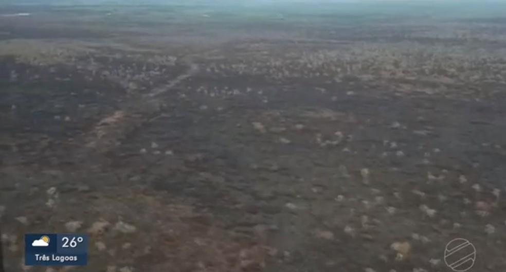 Queimada controlada no Pantanal de MS  — Foto: TV Morena/Reprodução