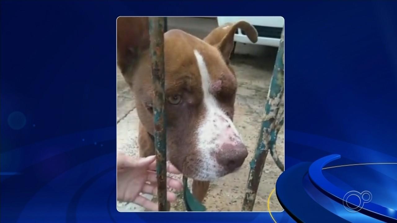 Mulher é presa em flagrante por maus-tratos a cães em Itapetininga