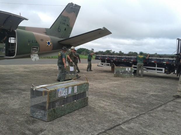 Animais foram levados de avião para GUdalupe no Piauí (Fot Rennan Nunes/Tv Clube)
